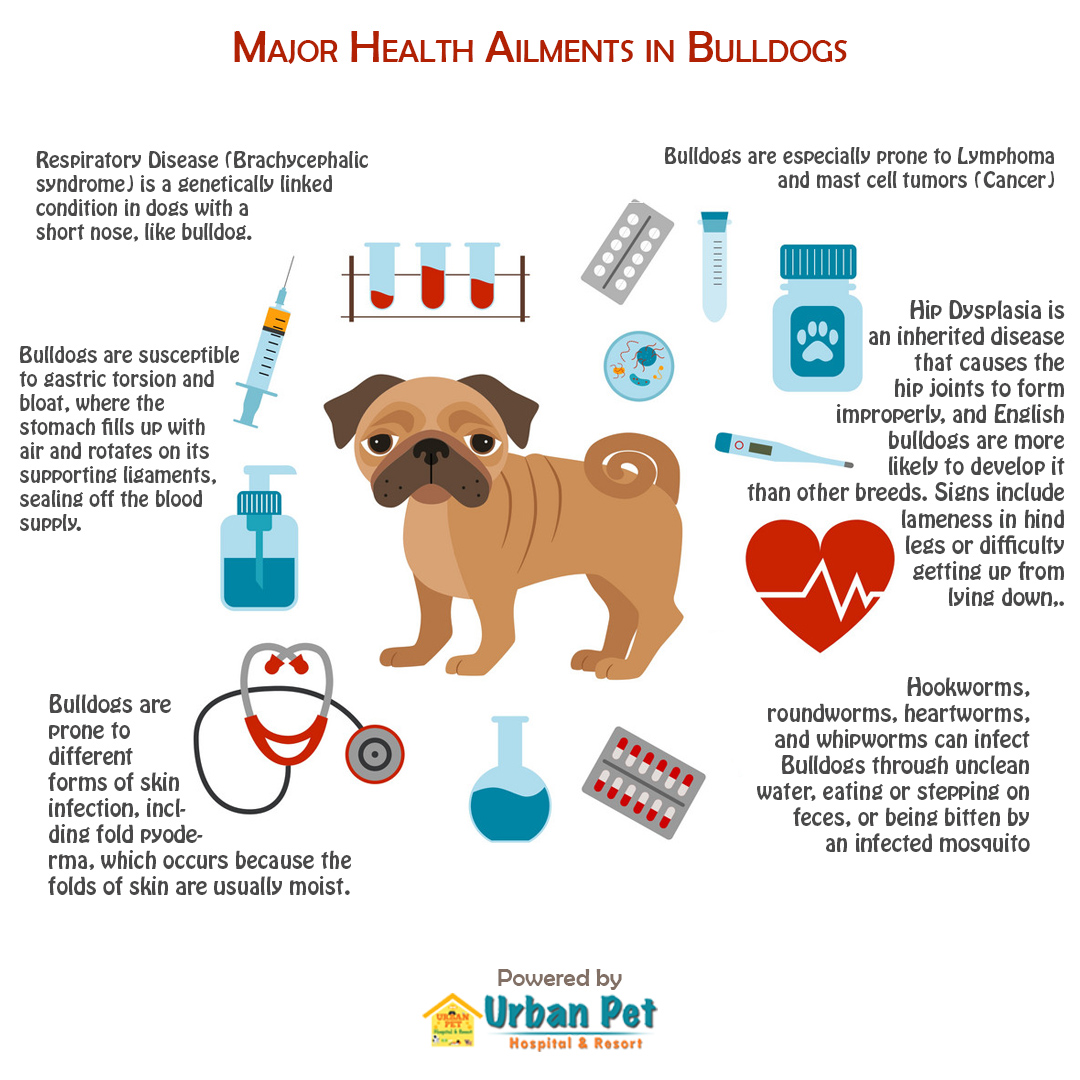 bulldog health ailments