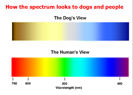 dogs color spectrum