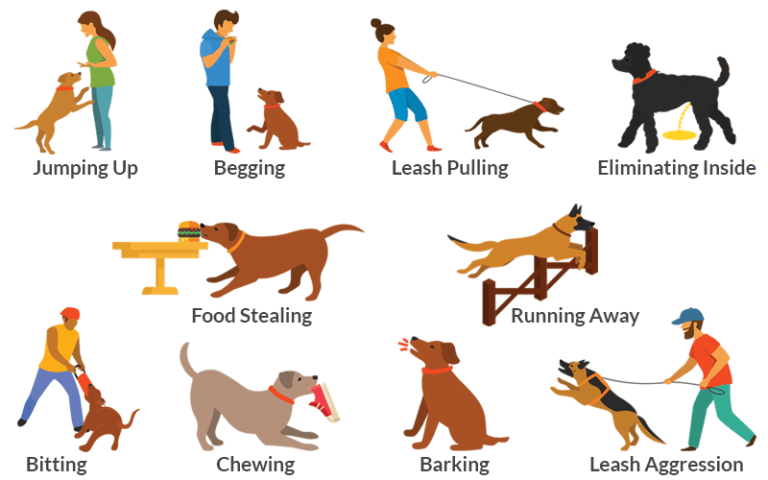 dog-behavioral problem
